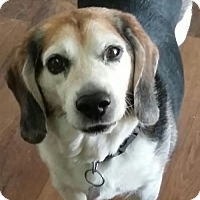Adopt A Pet :: Casey Jones - Dana Point, CA