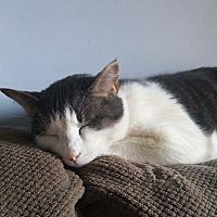 Adopt A Pet :: Sigmund - Vineland, NJ