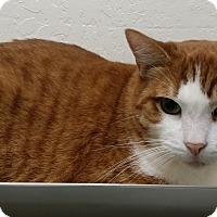 Adopt A Pet :: Rowdy - Santa Cruz, CA