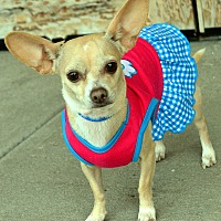 Adopt A Pet :: Satin - Bridgeton, MO