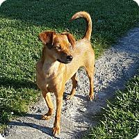 Adopt A Pet :: Sofie - New Oxford, PA