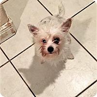 Adopt A Pet :: Roxy - Tavares, FL