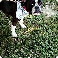 Adopt A Pet :: Myrtle - Cincinnati, OH