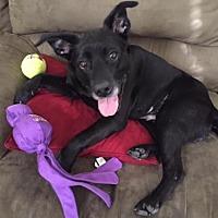 Adopt A Pet :: Maisie - Warrington, PA