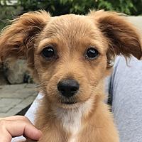 Adopt A Pet :: London - cupertino, CA