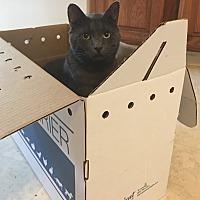 Adopt A Pet :: Fumar - Covington, KY