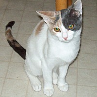 Adopt A Pet :: Kali - Waller, TX