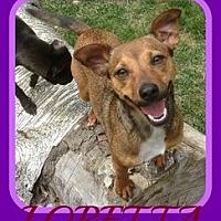 Adopt A Pet :: LORETTA - Jersey City, NJ