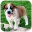 Photo 1 - Australian Cattle Dog Mix Puppy for adoption in Phoenix, Arizona - Chili