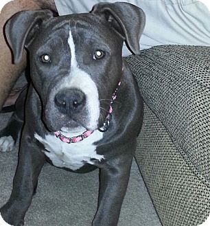 Pit Bull Terrier Mix Dog for adoption in San Dimas, California - Miss Lux