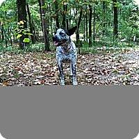 Adopt A Pet :: Bailey - Conway, AR