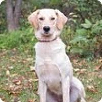 Adopt A Pet :: Gretel - Lewisville, IN