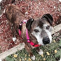 Adopt A Pet :: jasmine - Wanaque, NJ
