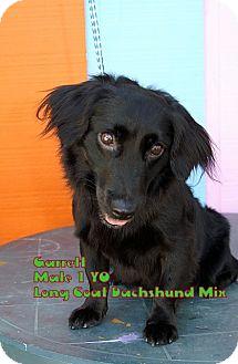 Dachshund Mix Dog for adoption in Englewood, Florida - Garrett