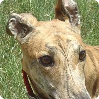 Adopt A Pet :: Hi Maddie - Longwood, FL