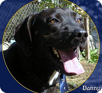 Labrador Retriever Mix Dog for adoption in Columbia, Tennessee - Danny