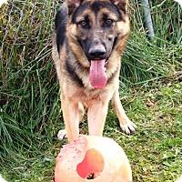 Adopt A Pet :: Nahla - Pleasant Plain, OH