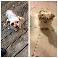 Adopt A Pet :: *ADOPTION PENDING*Lucky - Parsippany, NJ