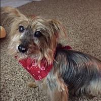 Adopt A Pet :: Maximilian - Dartmouth, MA