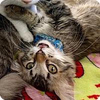 Adopt A Pet :: Vivian - Maryville, TN