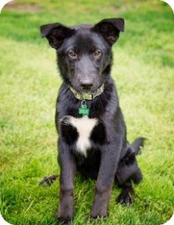 Labrador Retriever Mix Dog for adoption in Lewisville, Indiana - Junie