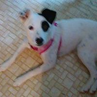 Adopt A Pet :: Sloopy - Springfield, MO