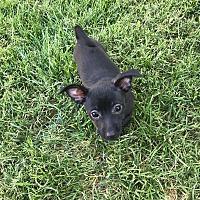 Adopt A Pet :: Raven - Rancho Cucamonga, CA