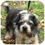 Photo 1 - Lhasa Apso/Terrier (Unknown Type, Small) Mix Dog for adoption in PRINCETON, New Jersey - Sophie