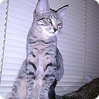 Adopt A Pet :: Teegra - Scottsdale, AZ