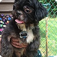 Adopt A Pet :: Reilly - Rockaway, NJ