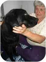 Labrador Retriever Mix Dog for adoption in Brookville, Ohio - Kerri