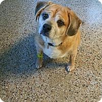 Adopt A Pet :: Lola - Richmond, VA