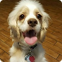 Adopt A Pet :: Ursula - Sugarland, TX