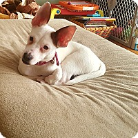 Adopt A Pet :: Pixie - Lancaster, PA
