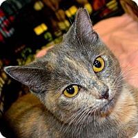 Adopt A Pet :: Freya - Baltimore, MD