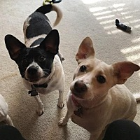 Adopt A Pet :: Amy & Frankie in Dallas - Dallas/Ft. Worth, TX
