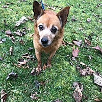 Adopt A Pet :: Brandy - Ona, WV