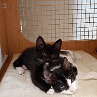 Adopt A Pet :: BOO AND SYDNEY - Brea, CA