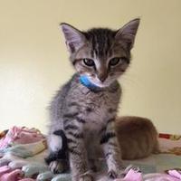 Adopt A Pet :: Typhoon - Buffalo, WY