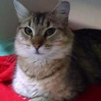 Adopt A Pet :: Coruscant - Fort Collins, CO