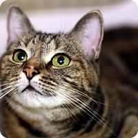 Adopt A Pet :: Bissa - New York, NY