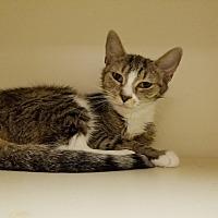 Adopt A Pet :: Cheech - Elyria, OH