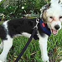 Adopt A Pet :: Mingo - Fort Lauderdale, FL