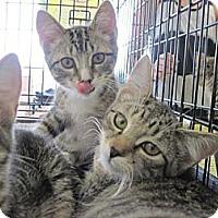 Adopt A Pet :: Gabby - Warren, OH