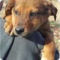 Adopt A Pet :: Dickens - Plainfield, CT