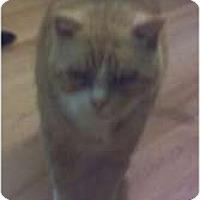 Adopt A Pet :: Fletch - Fort Lauderdale, FL