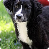 Adopt A Pet :: Katie - South Jersey, NJ