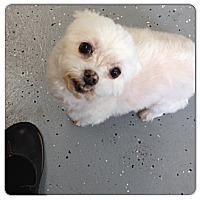 Adopt A Pet :: Sunday - Sheridan, OR