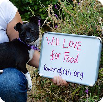 Chihuahua Mix Dog for adoption in Oakland, California - Lulu