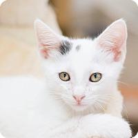 Adopt A Pet :: Travis - Fountain Hills, AZ